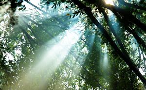 大自然に囲まれた「森のホテル」